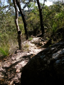 The trail up to Ridge Top